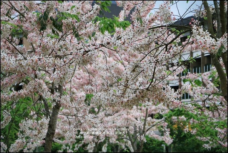 2016-05-鹿鳴溫泉洒店(花旗木)29.jpg