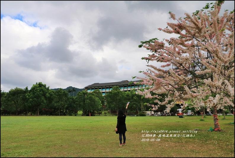 2016-05-鹿鳴溫泉洒店(花旗木)32.jpg