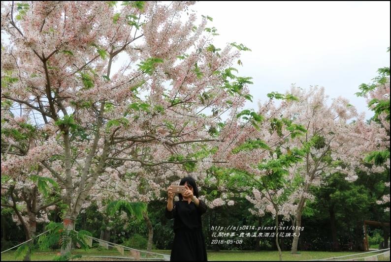 2016-05-鹿鳴溫泉洒店(花旗木)34.jpg