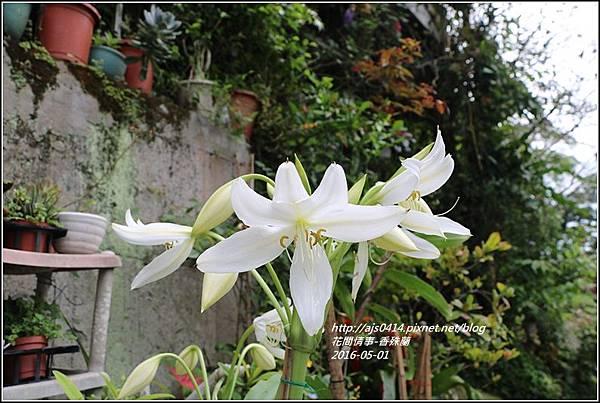 2016-05-香殊蘭8.jpg