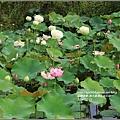 馬太鞍濕地-105-05-03.jpg