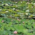 馬太鞍濕地-105-05-05.jpg