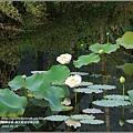 馬太鞍濕地-105-05-09.jpg