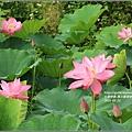 馬太鞍濕地-105-05-08.jpg