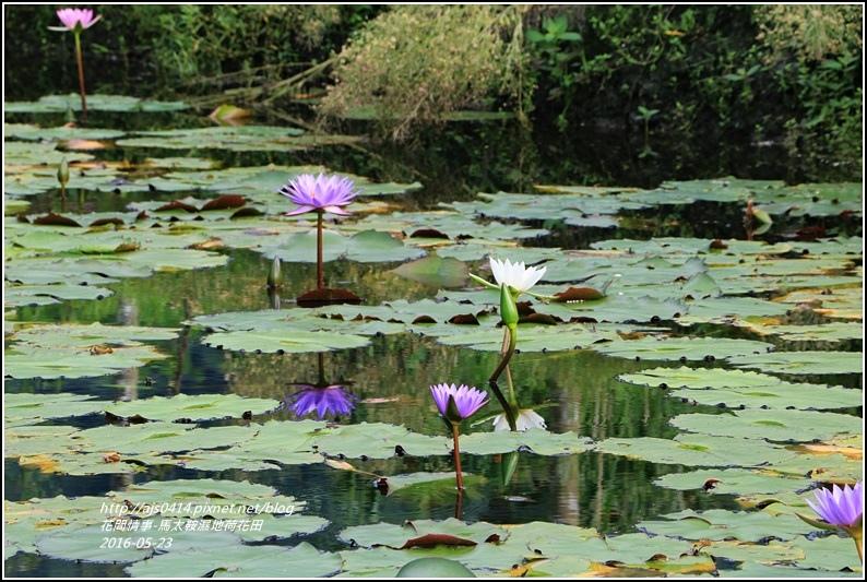 馬太鞍濕地-105-05-16.jpg