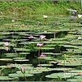 馬太鞍濕地-105-05-17.jpg