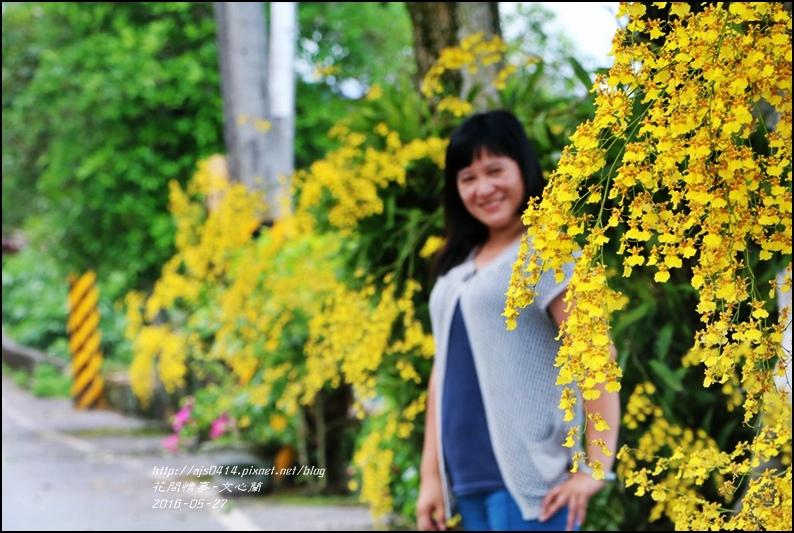 文心蘭-2016-05-01.jpg