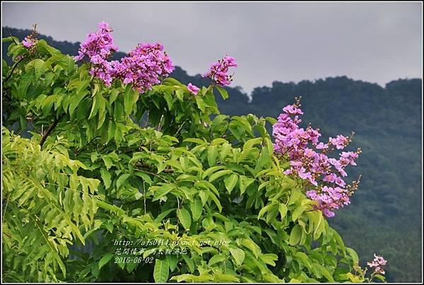 馬太鞍濕地-105-06-08.jpg