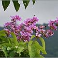 馬太鞍濕地-105-06-07.jpg