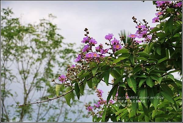 馬太鞍濕地-105-06-10.jpg