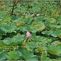 馬太鞍濕地-105-06-15.jpg