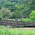 馬太鞍濕地-105-06-21.jpg