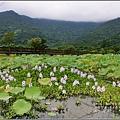 馬太鞍濕地-105-06-22.jpg