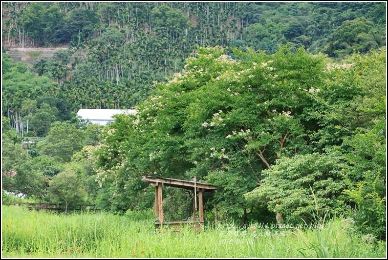馬太鞍濕地-105-06-24.jpg