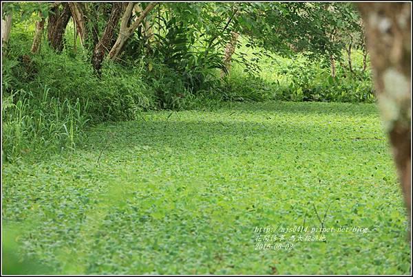 馬太鞍濕地-105-06-27.jpg