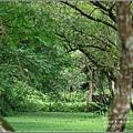 馬太鞍濕地-105-06-28.jpg