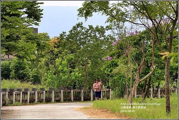 馬太鞍濕地悠遊-105-06-04.jpg