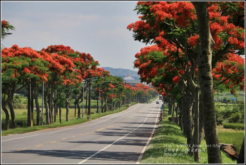 富里路段鳳凰木-2016-06-01.jpg