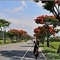 富里路段鳳凰木-2016-06-08.jpg