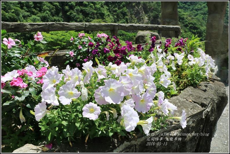 天龍吊橋-2016-05-27.jpg