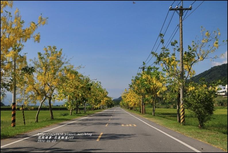 縣道193阿勃勒-2016-06-32.jpg