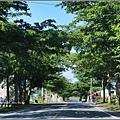 193小葉欖仁樹-2016-06-01.jpg