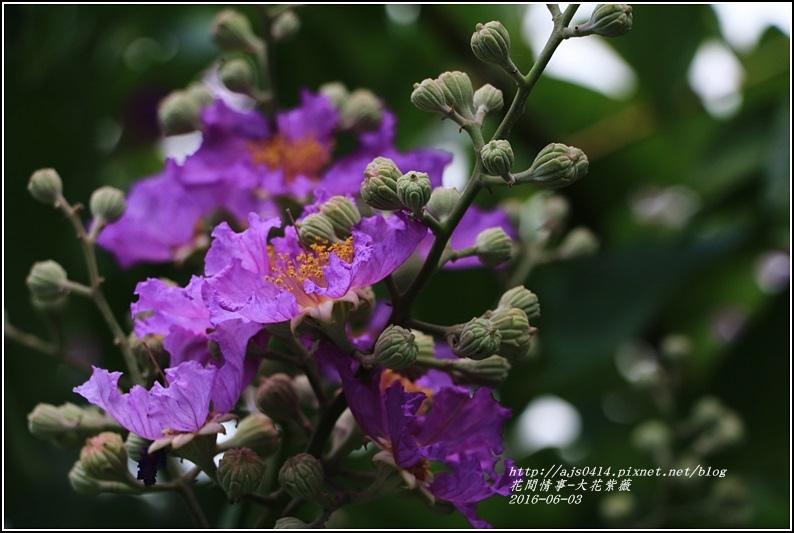 大花紫薇-2016-06-02.jpg