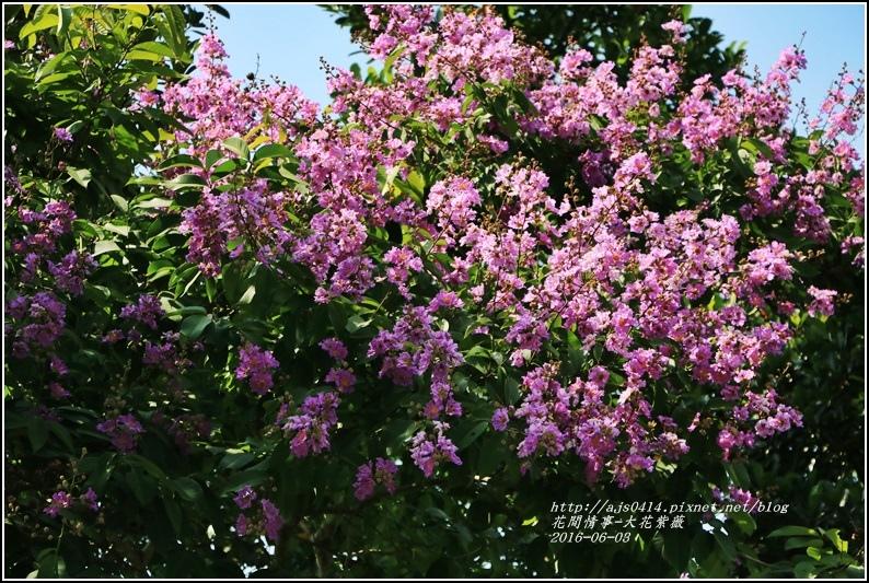 大花紫薇-2016-06-03.jpg