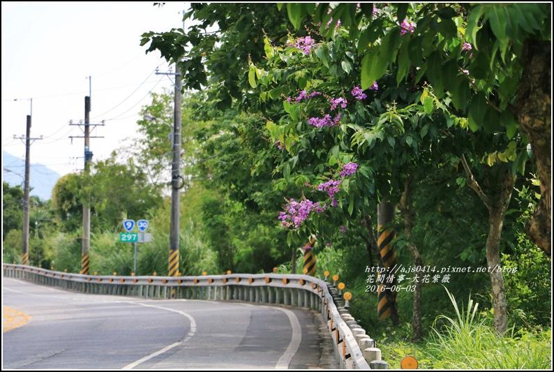大花紫薇-2016-06-07.jpg