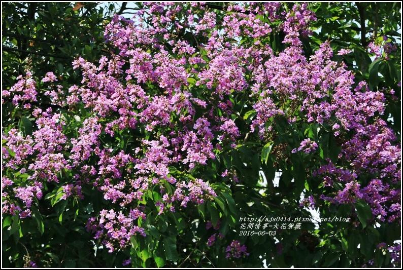 大花紫薇-2016-06-09.jpg