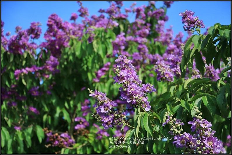 大花紫薇-2016-06-15.jpg