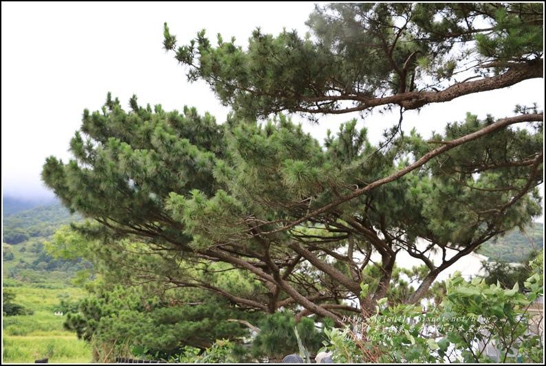 台東忠孝國小黑松-2016-06-05.jpg
