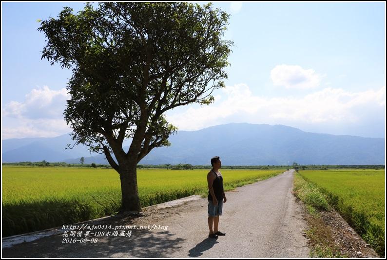 193田野風情-2016-06-05.jpg
