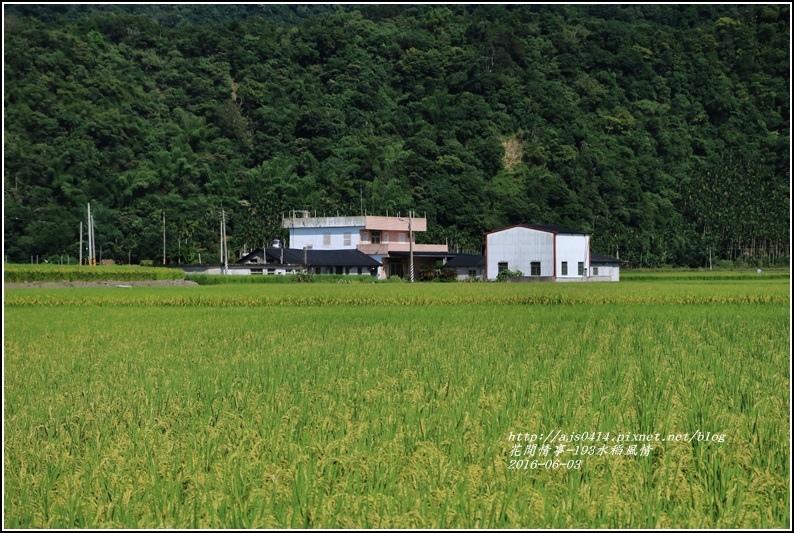 193田野風情-2016-06-08.jpg