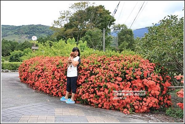 仙丹花小徑02.jpg