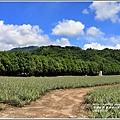 龍田自行車道-2016-07-03.jpg