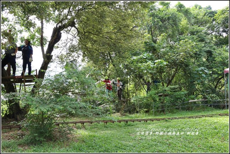 野猴子森林樂園(樹冠層)-2016-08-26.jpg