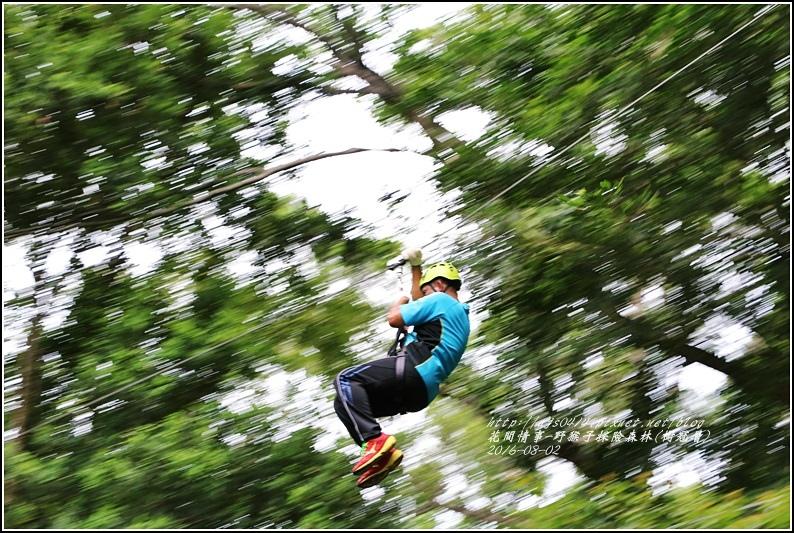 野猴子森林樂園(樹冠層)-2016-08-36.jpg