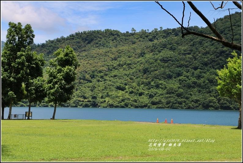 鯉魚潭旁樹屋-2016-08-12.jpg