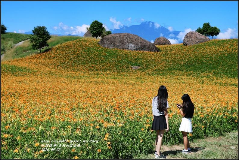 赤柯山賞金趣(金針花海)-2016-08-37.jpg