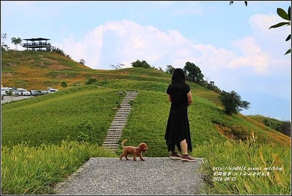 2016-六十石山金針花季-2016-08-05.jpg