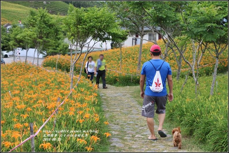 2016-六十石山金針花季-2016-08-07.jpg