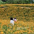 2016-六十石山金針花季-2016-08-18.jpg