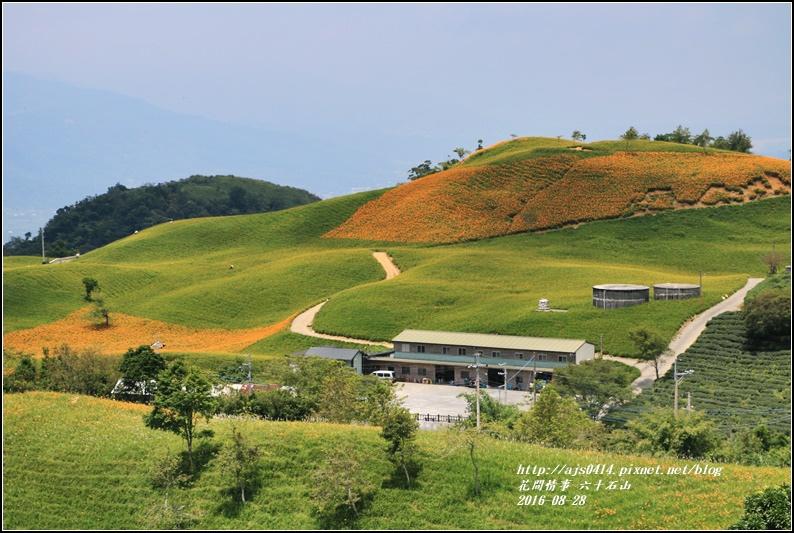 2016-六十石山金針花季-2016-08-56.jpg