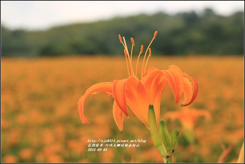 大娜同遊赤柯山-2016-09-56.jpg