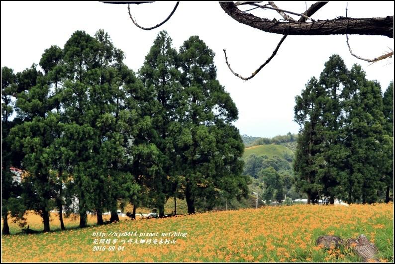 大娜同遊赤柯山-2016-09-60.jpg
