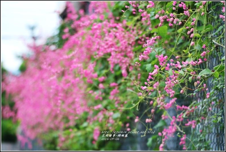 珊瑚藤-2016-09-02.jpg