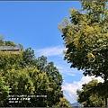 台灣欒樹-2016-09-02.jpg