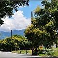 台灣欒樹-2016-09-04.jpg