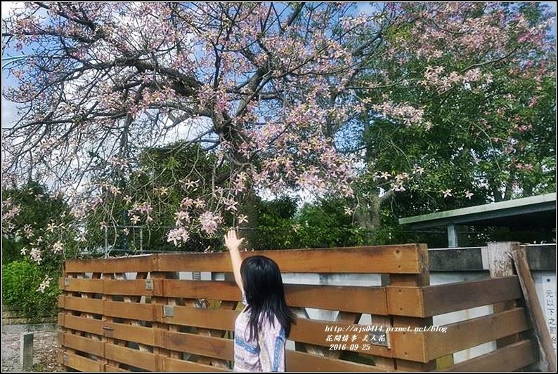 美人樹(花)-2016-09-03.jpg